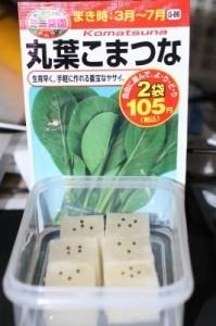 小松菜 2013.8.29