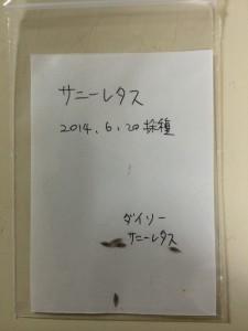 サニーレタス 種袋 2014.6.20