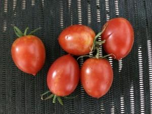 トマト ルビーノ 収穫 2014.8.16