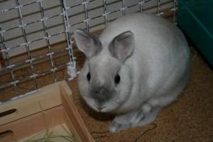 ナナ 2009.9.4