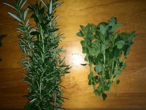 収穫したローズマリーとオレガノ 2015.4.24