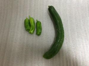 キュウリ&シシトウ 収穫 2015.6.18