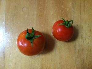 2015.6.27 トマト 収穫