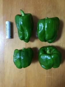 市民農園 収穫 ピーマン 2015.7.2