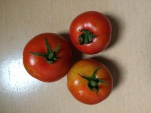 2015.7.4 トマト 収穫