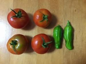 2015.7.9 トマト・シシトウ 収穫