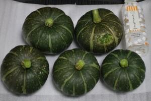 カボチャ 市民農園 収穫 2015.7.7
