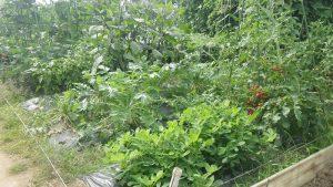 2016.7.3 市民農園