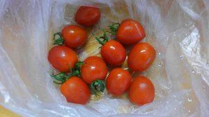 ミニトマト 収穫 2016.7.3 市民農園