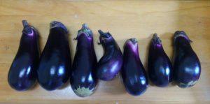 ナス 市民農園 収穫 2016.7.20