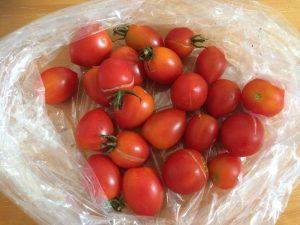 ミニトマト 収穫 市民農園 2016.8.8
