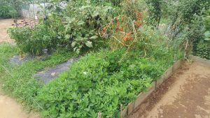 市民農園 2016.9.3