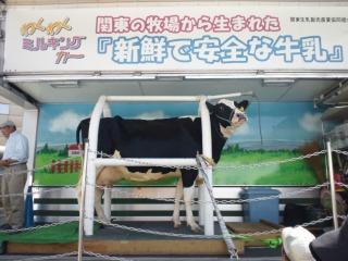 川崎市畜産フェア 牛乳搾り体験会場