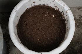 うさぎ糞堆肥
