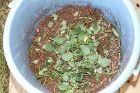 うさぎ糞堆肥 工程3