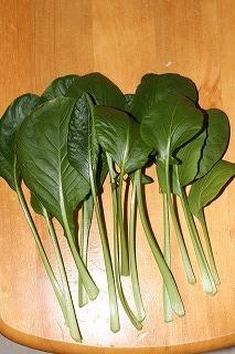 小松菜 収穫 101120