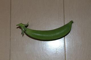 スナップエンドウ 収穫