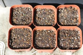 種まき 110405 キュウリ,トマト,オクラ