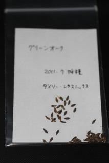 レタス グリーンオーク 採種 110702