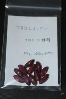 インゲン 110710
